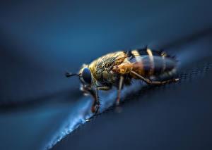 Papel de Parede Desktop moscas De perto Animalia