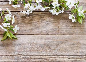 Hintergrundbilder Blühende Bäume Ast Vorlage Grußkarte Bretter Blumen