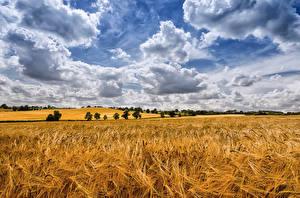 Hintergrundbilder Felder Himmel Weizen Wolke Ähren