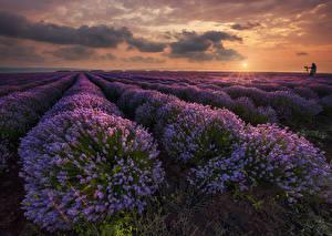 Fotos Sonnenaufgänge und Sonnenuntergänge Acker Lavendel Landschaftsfotografie Wolke Natur