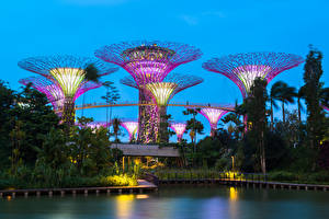 Photo Singapore Pond Parks Trees Gardens by the Bay Nature