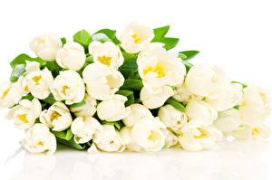 Fondos de escritorio Tulipa Blanco El fondo blanco Flores