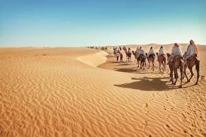 Fotos Wüste Altweltkamele Natur
