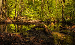 Sfondi desktop Foresta Tronco d'albero Palude
