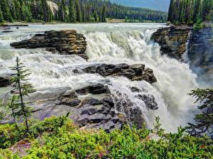 Bilder Vereinigte Staaten Wasserfall Wälder Park Felsen Jasper park Athabasca Falls
