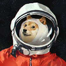Wallpapers Cosmonauts Dogs Helmet Space