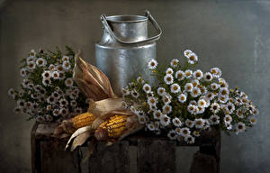 Image Still-life Matricaria Corn flower