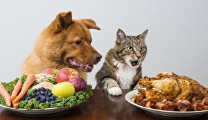 Pictures Dogs Cat Roast Chicken Fruit Vegetables Plate Animals