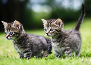 Images Cats Grass Kittens 2 animal