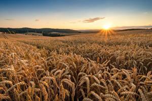 Hintergrundbilder Sonnenaufgänge und Sonnenuntergänge Himmel Acker Weizen Sonne Ähre Natur