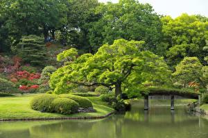 Pictures Gardens Pond Tokyo Japan Trees Rikugien Garden Nature