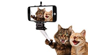 Wallpaper Cat Two Smartphones White background Selfie Funny Animals Humor