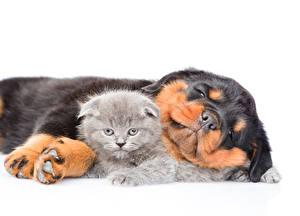 Image Dog Cats Kitty cat Rottweiler Sleeping 2 White background Animals