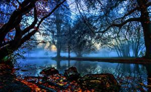 Bilder England Flusse Herbst London Bäume Nebel Ast Morden Hall Park Natur