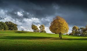 Pictures Grasslands Autumn Trees Thundercloud Nature