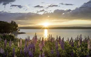 Hintergrundbilder Australien Landschaftsfotografie Sonnenaufgänge und Sonnenuntergänge Lupinen Himmel Sydney Point Edward Natur