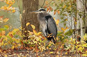 Fotos Reiher Vögel Baumstamm