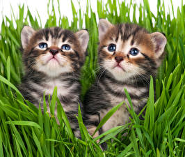 Photo Cats Kittens 2 Grass Staring animal