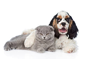 Wallpaper Dogs Cat White background Two Spaniel animal
