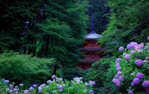 Picture Japan Gardens Hydrangea Pagodas Kyoto Trees Nature
