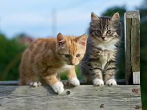 Wallpaper Cats Two Kittens Red orange Animals