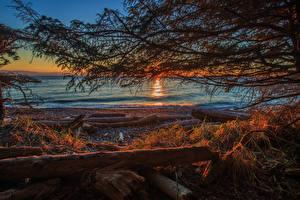Bilder Kanada Sonnenaufgänge und Sonnenuntergänge Küste Ast Shirley British Columbia Natur