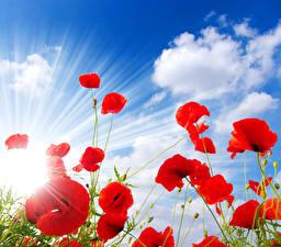 Fotos Mohn Himmel Rot Wolke Lichtstrahl Blumen