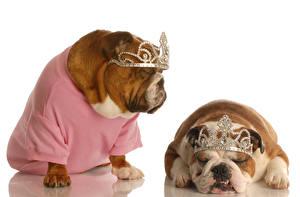 Photo Dog 2 Two Bulldog Uniform Sleep Animal Animals