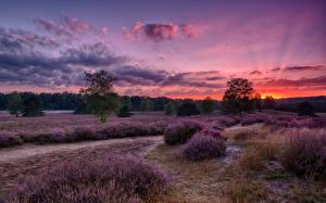 Bilder Deutschland Landschaftsfotografie Sonnenaufgänge und Sonnenuntergänge Felder Lavendel Heide Natur
