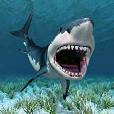 Fonds d'écran Monde sous-marin Requins Dents 3D_Graphiques