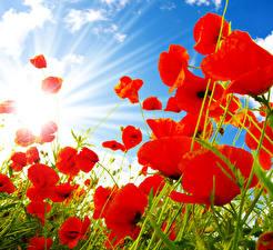 Fotos Mohn Großansicht Himmel Lichtstrahl Rot Blumen