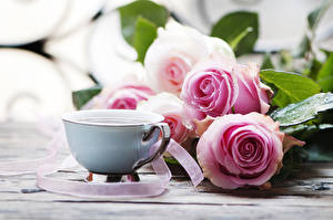 Pictures Roses Coffee Cup Pink color Flowers