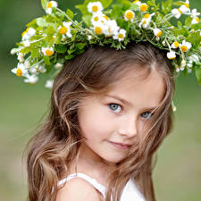 Wallpaper Matricaria Little girls Dark Blonde Glance Hair Cute child