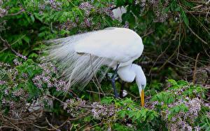 Fotos Vogel Reiher Tiere