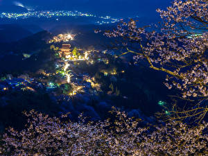 Pictures Japan Houses Branches Cherry blossom Night Street lights Nature