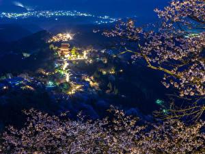 Fondos de Pantalla Japón Casa Rama Sakura (cerezo) Noche Farola Naturaleza