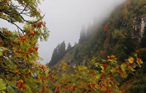 Bilder Gebirge Ast Nebel Natur