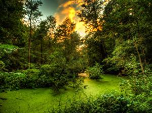 Sfondi desktop Foreste Alberi Arbusti Palude