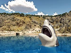 Fonds d'écran Requins Mer 3D_Graphiques