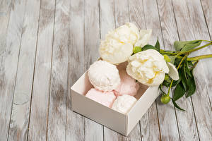 Wallpapers Peony Confectionery Zefir Two White flower