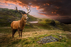 Images Scenery Deer Clouds Grass animal