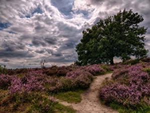 Hintergrundbilder Lavendel Bäume Wolke Weg Natur