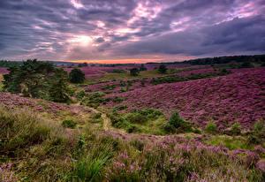 Fotos Landschaftsfotografie Felder Lavendel Natur