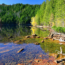 Pictures Czech Republic Lake Forest Stone Nature