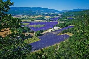 Desktop hintergrundbilder Frankreich Landschaftsfotografie Acker Lavendel Natur