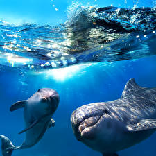 Wallpapers Underwater world Dolphins Waves Water Two animal