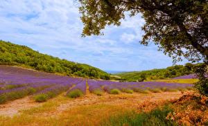 Bilder Frankreich Landschaftsfotografie Felder Lavendel Malijai Natur