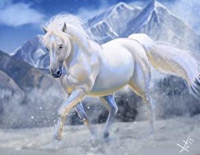 Fotos Pferde Gezeichnet Weiß ein Tier