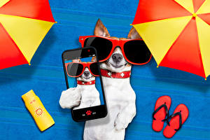 Image Dogs Jack Russell terrier Smartphone Glasses Colored background Selfie Funny animal
