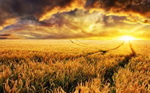 Bilder Felder Sonnenaufgänge und Sonnenuntergänge Weizen Wolke Ähre